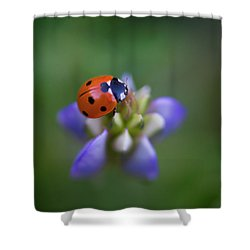 Shower Curtain featuring the photograph Lady Bug by John Rodrigues