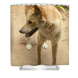 Shower Curtain featuring the photograph Large Australian Dingo Outside by Rob D