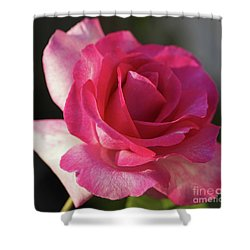 Late October Rose Shower Curtain