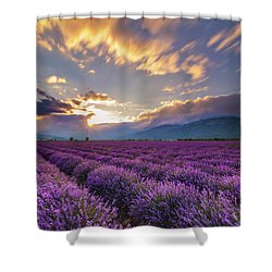Lavender Sun Shower Curtain