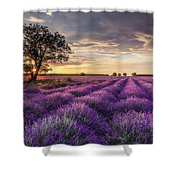 Lavender Sunrise Shower Curtain