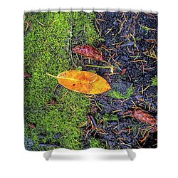 Shower Curtain featuring the photograph Leaf And Mossy by Jon Burch Photography