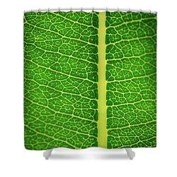 Leafy Detail Shower Curtain