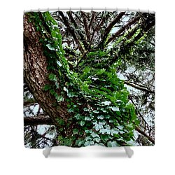 Shower Curtain featuring the photograph Leafy Tree Trunk by Lukas Miller