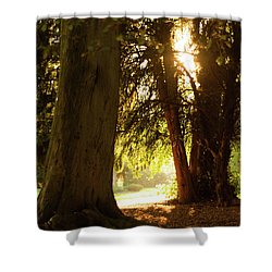 Shower Curtain featuring the photograph Light Between Trees by Scott Lyons