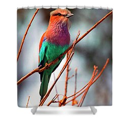 Shower Curtain featuring the photograph Lilac Breasted Roller by John Rodrigues