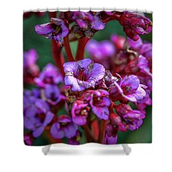Shower Curtain featuring the photograph Lilac #h9 by Leif Sohlman