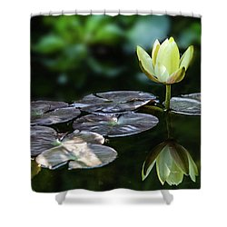 Lily In The Pond Shower Curtain