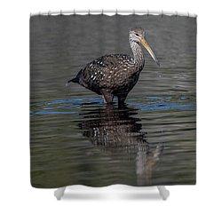 Limpkin Shower Curtain
