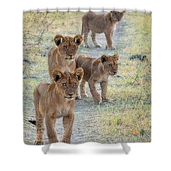 Shower Curtain featuring the photograph Lion Cubs On The Trail by John Rodrigues