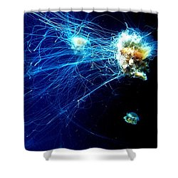 Lion-head Jellyfish  Shower Curtain