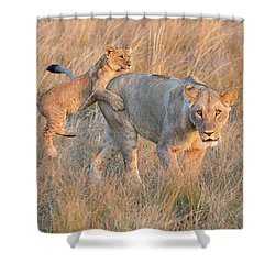 Shower Curtain featuring the photograph Lioness And Cub by John Rodrigues