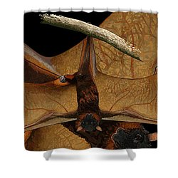 Little Red Flying Fox 2 Shower Curtain