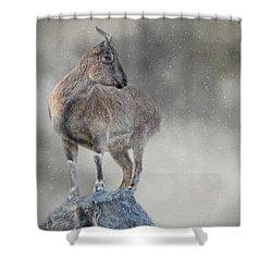 Little Rock Climber Shower Curtain
