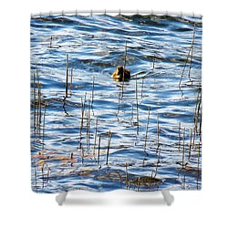 Lone Duckling Shower Curtain