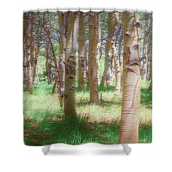 Lost In The Woods - Kenosha Pass, Colorado Shower Curtain