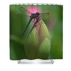 Shower Curtain featuring the photograph Lotus Bud And Slaty Skimmer Dragonfly Dl0006 by Gerry Gantt