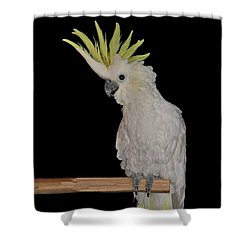 Shower Curtain featuring the photograph Lucy by Debbie Stahre