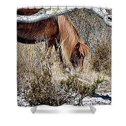 Shower Curtain featuring the photograph Lunchtime For Assateague's Gokey Go Go Bones by Bill Swartwout Fine Art Photography