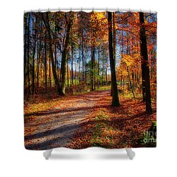 Shower Curtain featuring the photograph Magic Of The Forest by Edmund Nagele