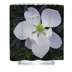 Shower Curtain featuring the painting Magnolia Flower Photo F9718 by Mas Art Studio