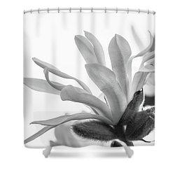 Magnolia Stellata Shower Curtain