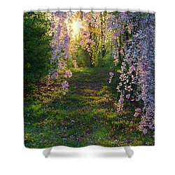 Shower Curtain featuring the photograph Magnolia Tree Sunset by Nathan Bush