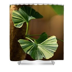 Shower Curtain featuring the photograph Maidenhair Tree by Dale Kincaid