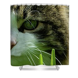 Shower Curtain featuring the photograph Maine Coon Cat Photo A111018 by Mas Art Studio