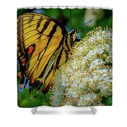 Manassas Butterfly Shower Curtain