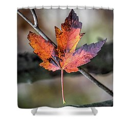 Shower Curtain featuring the photograph Maple 1 by Michael Arend