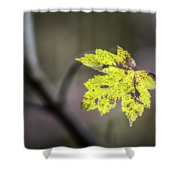 Shower Curtain featuring the photograph Maple Bright by Michael Arend