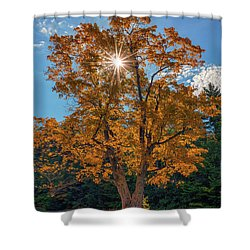 Shower Curtain featuring the photograph Maple Tree In Full Autumn Glory by Rick Berk