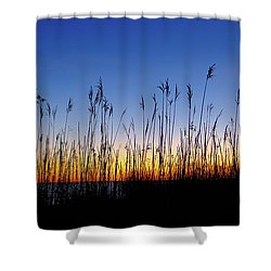 Marsh Grass Silhouette  Shower Curtain