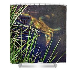 Shower Curtain featuring the photograph Maryland Blue Crab Lurking In An Assateague Marsh by Bill Swartwout Fine Art Photography