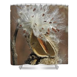 Milkweed Burst Shower Curtain