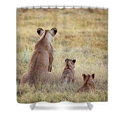 Shower Curtain featuring the photograph Mom And Cubs by John Rodrigues