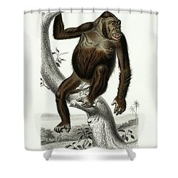 Monkey Shower Curtain Alcide