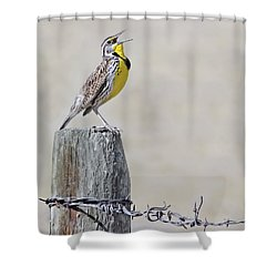 Montana Meadowlark's Spring Song Shower Curtain