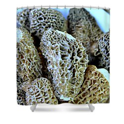 Morel Mushrooms Shower Curtain