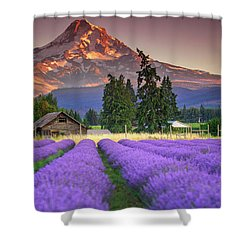 Mount Hood Lavender Field  Shower Curtain