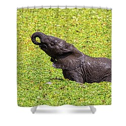 Shower Curtain featuring the photograph Mud Bath by Kay Brewer