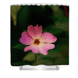 Multi Floral Rose Flower Shower Curtain