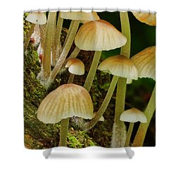 Mushrooms Shower Curtain