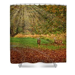 Shower Curtain featuring the photograph My Deer Family by Susan Candelario