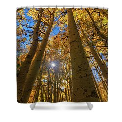 Shower Curtain featuring the photograph Natures Gold by Tassanee Angiolillo