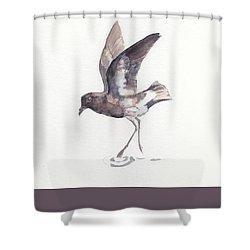 New Zealand Storm Petrel Shower Curtain