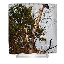 Northern Hawk Owl 101402 Shower Curtain