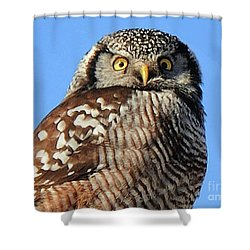 Shower Curtain featuring the photograph Northern Hawk-owl by Debbie Stahre