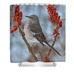 Shower Curtain featuring the photograph Northern Mockingbird by Debbie Stahre